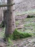 Landesvogelschutzwarte_Rundweg_20130412007