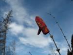 Landesvogelschutzwarte_Rundweg_20130412009
