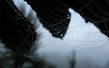 Zeit der schönen Netze